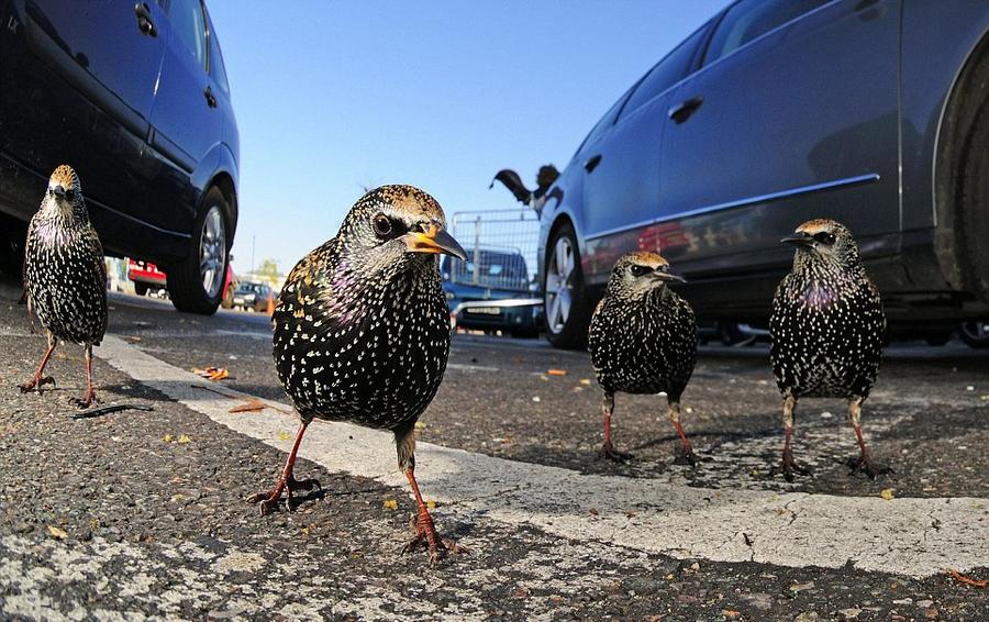 英国年度野生动物摄影大赛获奖作品